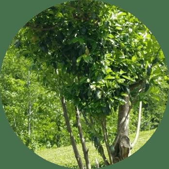 ağaç budama işlemi