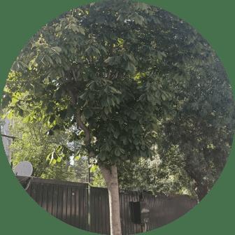 ağaç budama sancaktepe