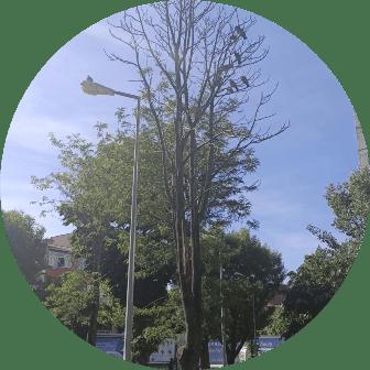 Ağaç budama şişli