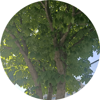 ağaç kesme şile