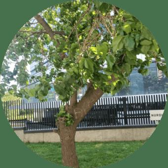 ağaç budama bebek