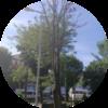 ağaç kesme incirli