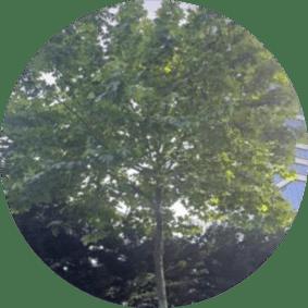 ağaç budama istanbul