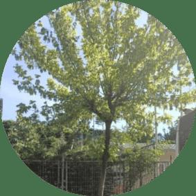 ağaç budama kavacık