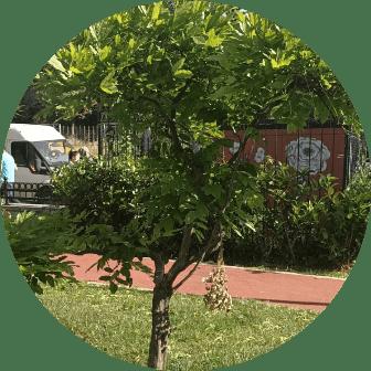 ağaç budama firması