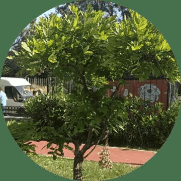 ağaç budama silivri