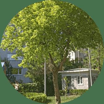 ağaç kesme sultanbeyli