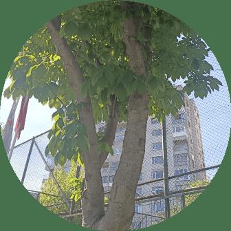 ağaç budama sultangazi