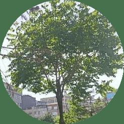 Ağaç kesme tarabya