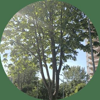 ağaç budama tuzla