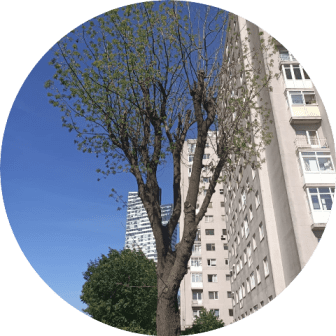 ağaç kesme zekeriyaköy