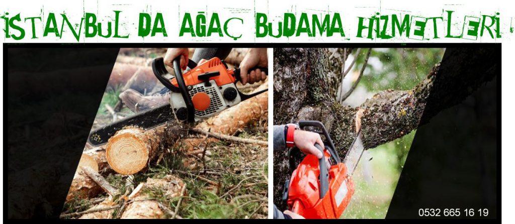 istanbul ağaç budama, istanbul ağaç kesme, istanbul budama hizmetleri