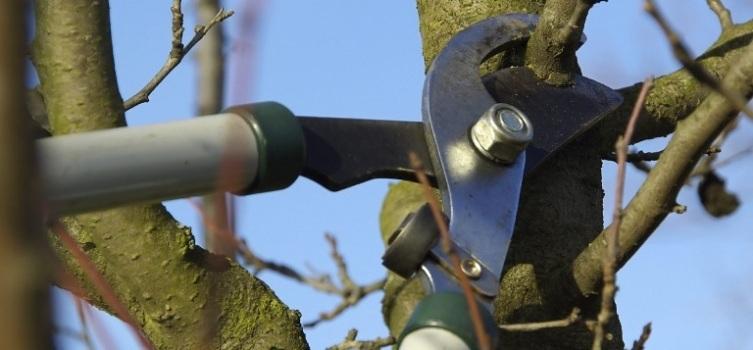 istanbul ağaç budama ustası
