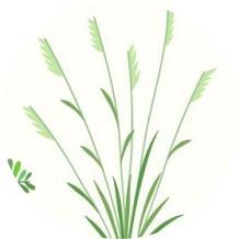 çim türleri