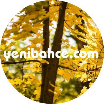Huş ağacı türleri