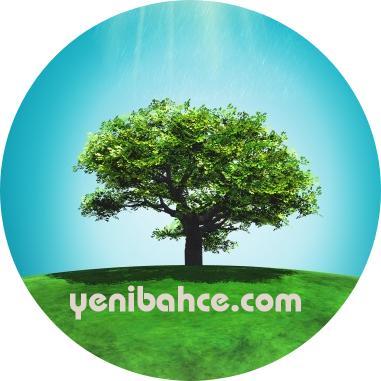 çınar ağacı budama