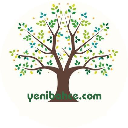 karaçam ağacı
