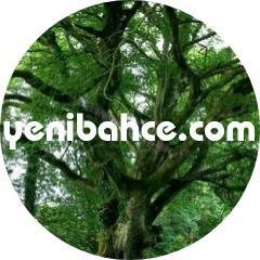kayın ağacı türleri