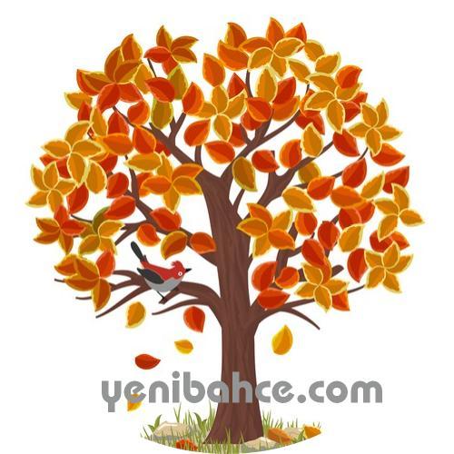 köknar ağacı budama