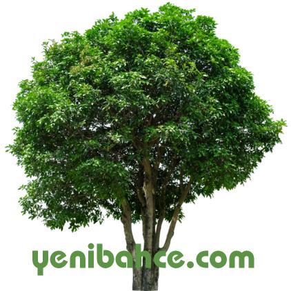 konya ağaç budama