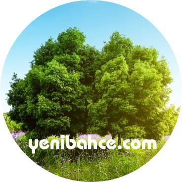 meşe ağacı türleri