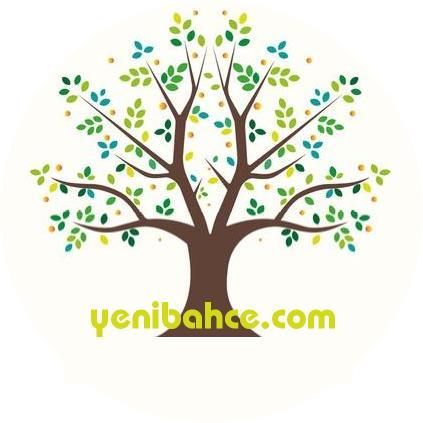 sarı çam ağacı