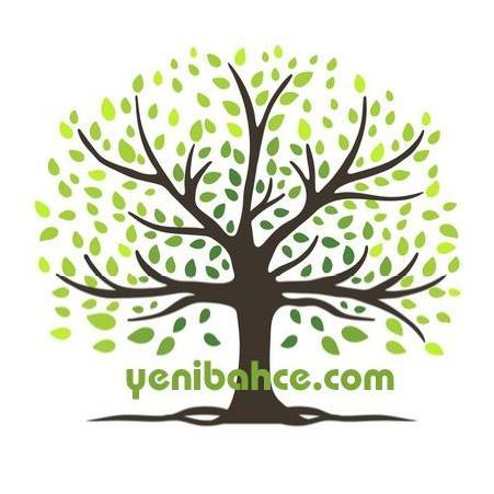 toros sediri ağacı