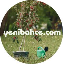 Arnavutköy Bahçe bakımı