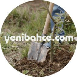 Eyüp Bahçe bakımı