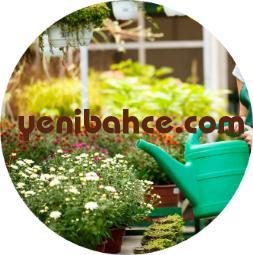 Kağıthane Bahçe Bakımı