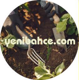 Küçük Çekmece Bahçe Bakımı