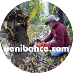 izmir ağaç budama