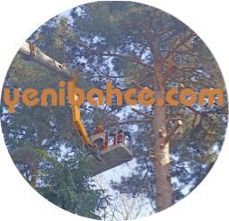 ağaç budama fiyatları