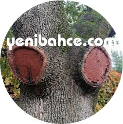 antalya ağaç budama