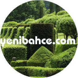 topiary sanatı nedir